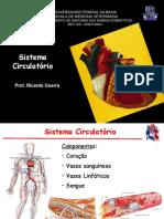 Sistema Circulatório Completo
