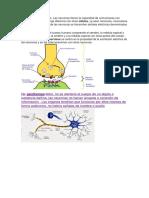 Función de las neuronas.docx