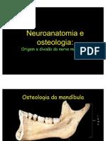 aula - neuroanatomia e osteologia, divisão mandibular