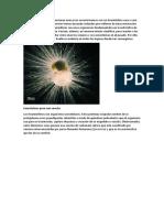 foraminiferos.docx