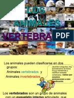 Los_animales Se Clasifican