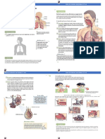 Guia Sistema respiratorio 5° A-B