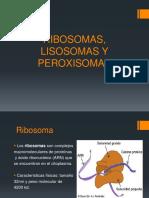 RIBOSOMAS, LISOSOMAS Y PEROXISOMAS.pptx