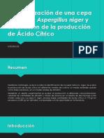 Caracterización de una cepa Nativa de Aspergillus niger.pptx