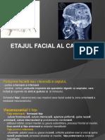 Curs 3-4 Regiune Faciala