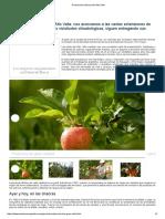 Producción Frutícola Del Alto Valle