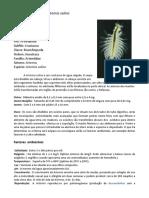 Artemia Salina