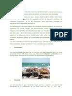 Las Sales Minerales.docx