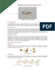 18 la reproducción de los seres vivos.pdf