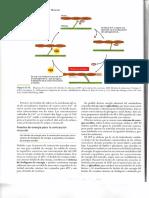 img172.pdf