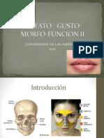 OLFATO-GUSTO d6.pptx