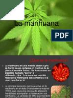 MARIHUANA EXPOSICION LIZ.pptx