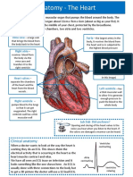 Module 1 - Heart Anatomy