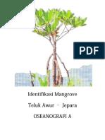 Iden Mangrove Ose A
