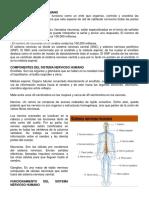 Características Del Sistema Nervioso Humano