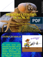 clase5moscas-120302074504-phpapp01