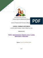 Organografia Vegetal Informe