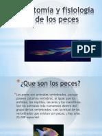 Anatomia y Fisiología De los Peces