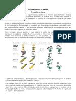 1 e 2 Lei de Mendel.docx