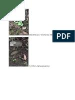 Document of Plants