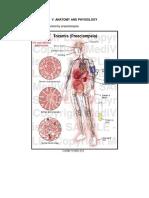 304337355-Anatomy-Pathophysiology-Preeclampsia.docx