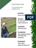 17 Artemisia Annua Production Guide1-2