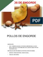 Pollos de Engorde 2016 Leo