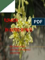523296Flo[1]..Fenologìa de Vid