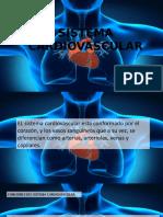Aparato-circulatorio