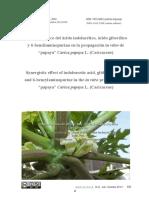 Efecto Sinérgico Del Ácido Indolacético, Ácido Giberélico... Papaya
