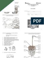 Examen Bimestral de Ciencias I (Enfasis en Biologia)