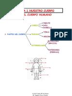 NUESTRO CUERPO-.pdf