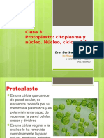 Clase 3 Protoplasto Citoplasma Nucleo 1