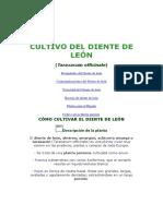 Cultivo Del Diente de León