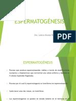 Diferenciación testicular.pptx