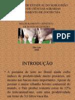 melhoramento animal02