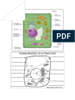 Cell Revision Diagrams