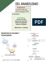 BASES DEL ANABOLISMO.pptx