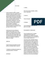 MORFOLOGIA Y ANATOMIA DE LA RAIZ.docx