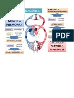 Sistema Circulatori