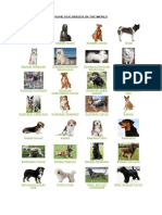 1.Dog Breeds.pdf