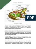Anfibio y Sus Características