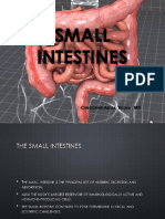Small Intestine