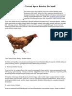 Kesempatan Usaha Ternak Ayam Petelur Berhasil