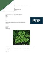 Soal Plantae