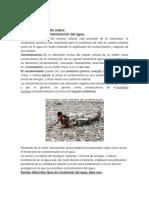 medio ambiente3copia.docx