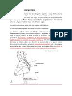 9. Anatomía-funcional-pelviana.docx