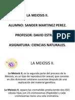 La Meiosis II Sander