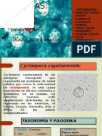 CICLOSPORA-CAYETANESIS