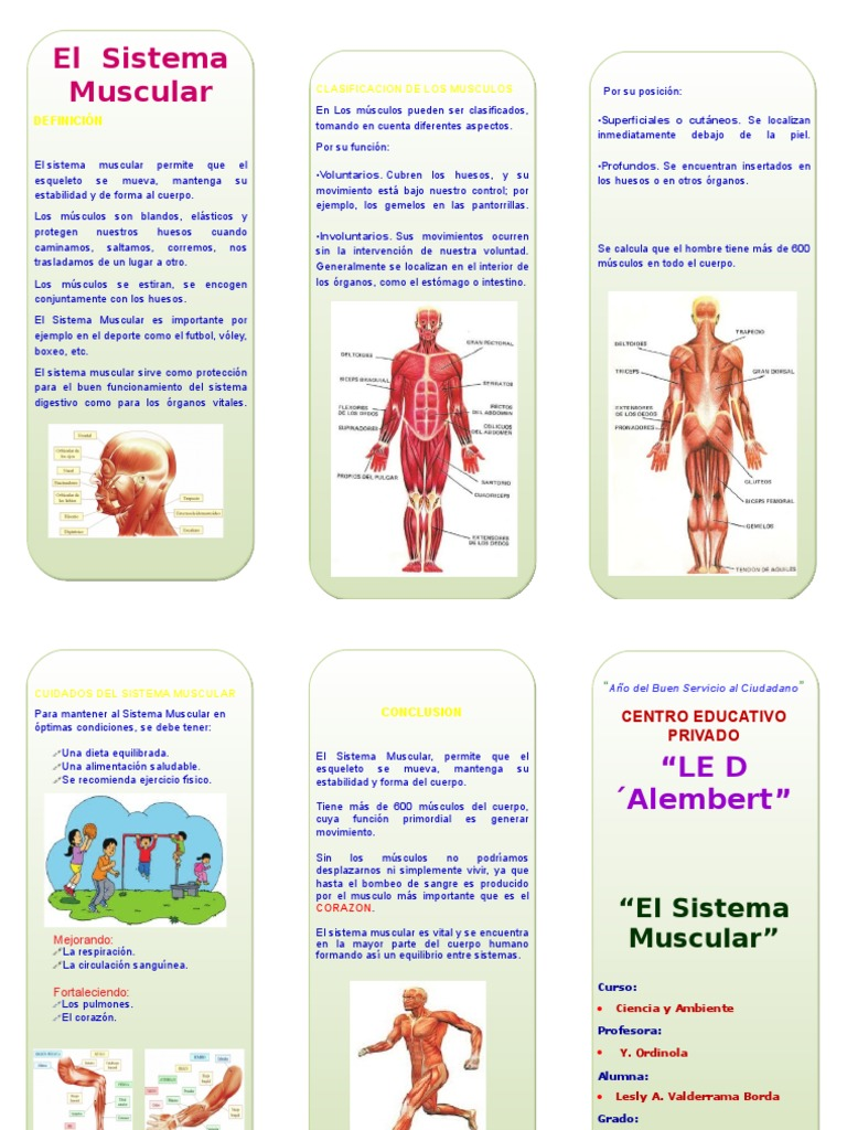 Lesly - Sistema Muscular Triptico